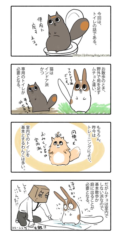 家猫たちのトイレ事情