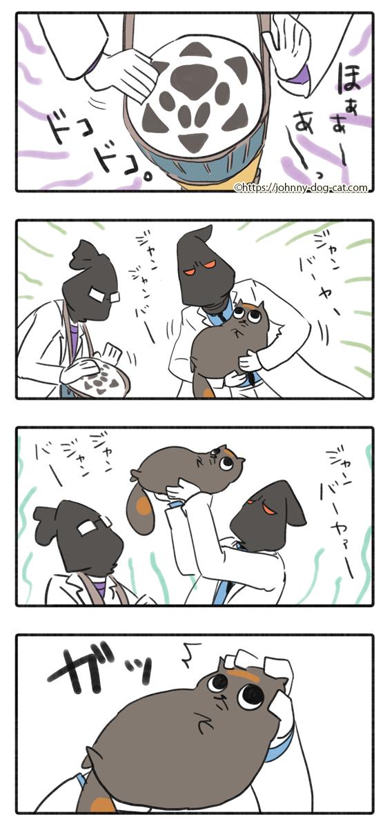 吐いた家猫5