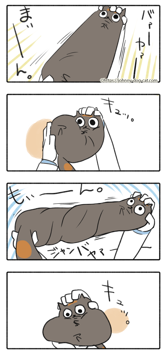 吐いた家猫6